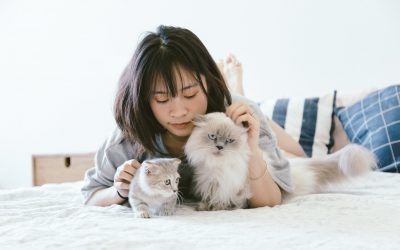 PETS AND TRAVEL: WHAT TO DO